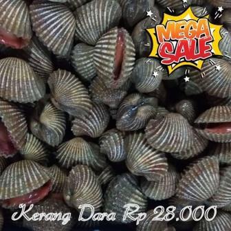 jual ikan laut jogja, supplier ikan laut, distributor ikan laut, jual ikan laut murah, jual ikan laut grosir, jual ikan laut sleman, jual ikan laut bantul, jual ikan laut borongan