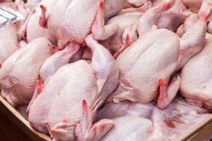 Jual Daging Ayam Broiler Jogja | Grosir Daging Ayam Potong di Yogyakarta