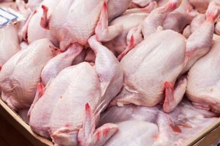 jual daging ayam broilet jogja, supplier daging ayam potong jogja, jual daging ayam potong terdekat, jual daging ayam potong, harga daging ayam potong jogja